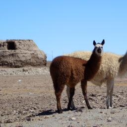 Alles von der Kuh – Eine Reise nach Bolivien