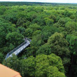 Spazieren zwischen sich wiegenden Ästen: Der Baumkronenpfad im Nationalpark Hainich