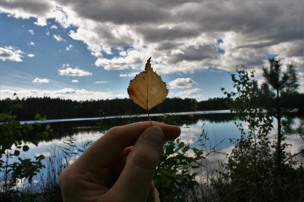 ReiseSpeisen Baltikum Slow Travel Kemeru National Park