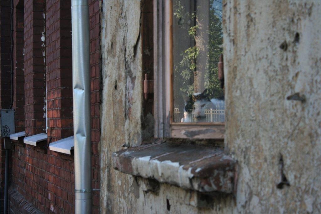 ReiseSpeisen I Lettland I Liepaja I Haus mit Katze