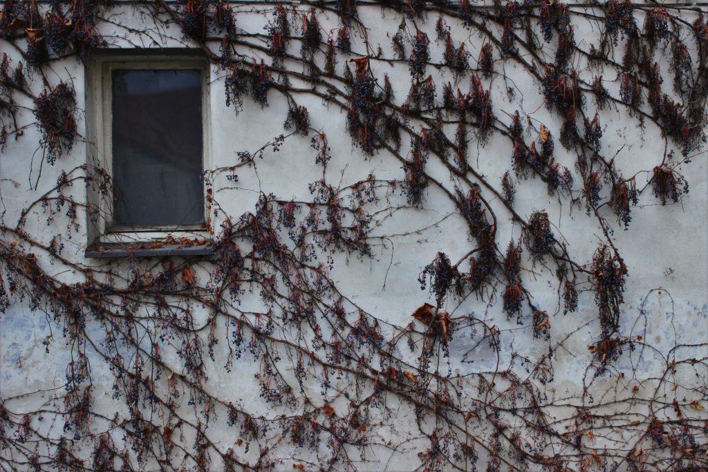 ReiseSpeisen I Prag I Tschechien I Wand mit Pflanze